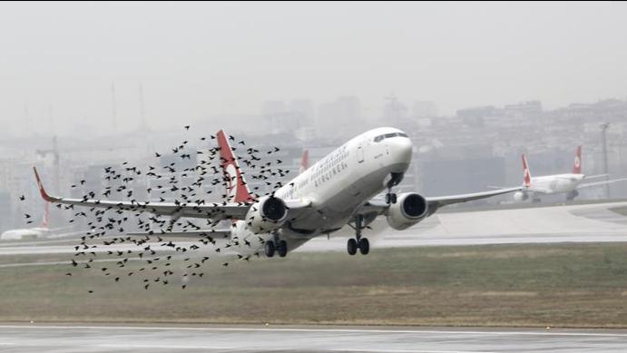Bird strikes Evergreen Aviation