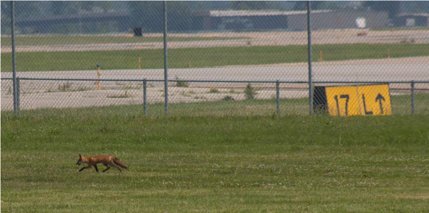 Wildlife management Evergreen Aviation